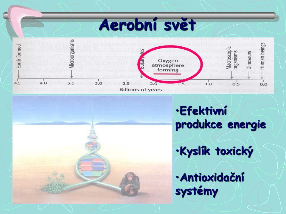 Aerobní svět Efektivní produkce energieEfektivní produkce energie Kyslík toxickýKyslík toxický Antioxidační systémyAntioxidační systémy