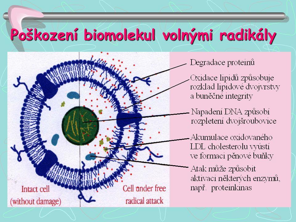 Poškození biomolekul volnými radikály