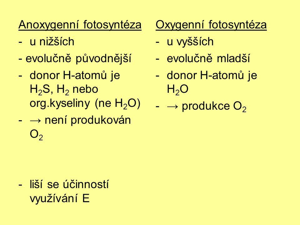 Anoxygenní fotosyntéza -u nižších - evolučně původnější -donor H-atomů je H 2 S, H 2 nebo org.kyseliny (ne H 2 O) -→ není produkován O 2 -liší se účinností využívání E Oxygenní fotosyntéza -u vyšších -evolučně mladší -donor H-atomů je H 2 O -→ produkce O 2