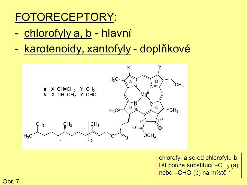 FOTORECEPTORY: -chlorofyly a, b - hlavní -karotenoidy, xantofyly - doplňkové chlorofyl a se od chlorofylu b liší pouze substitucí –CH 3 (a) nebo –CHO