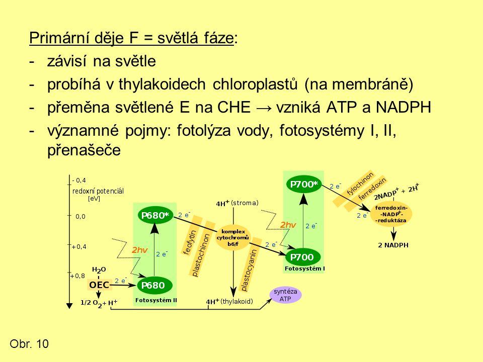 Primární děje F = světlá fáze: -závisí na světle -probíhá v thylakoidech chloroplastů (na membráně) -přeměna světlené E na CHE → vzniká ATP a NADPH -v