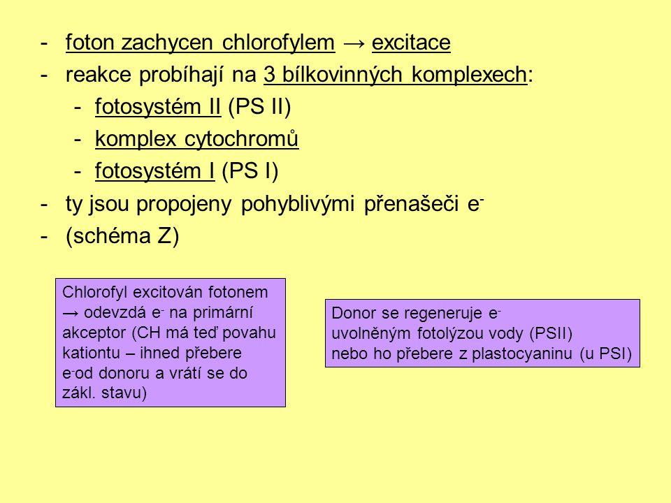 -foton zachycen chlorofylem → excitace -reakce probíhají na 3 bílkovinných komplexech: -fotosystém II (PS II) -komplex cytochromů -fotosystém I (PS I) -ty jsou propojeny pohyblivými přenašeči e - -(schéma Z) Chlorofyl excitován fotonem → odevzdá e - na primární akceptor (CH má teď povahu kationtu – ihned přebere e - od donoru a vrátí se do zákl.