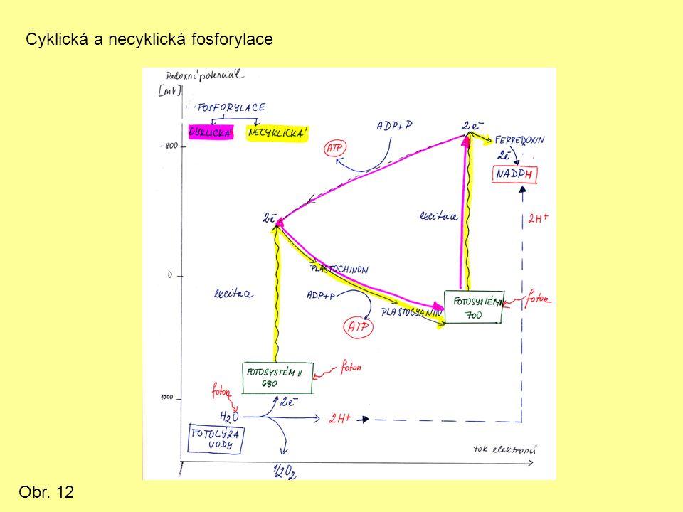 Cyklická a necyklická fosforylace Obr. 12