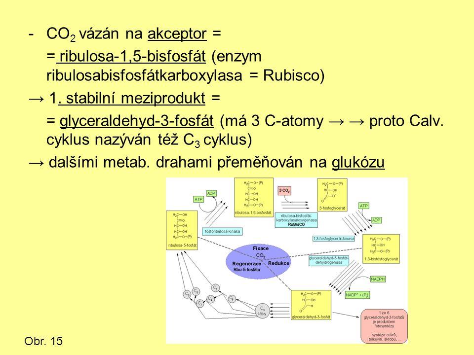 -CO 2 vázán na akceptor = = ribulosa-1,5-bisfosfát (enzym ribulosabisfosfátkarboxylasa = Rubisco) → 1.