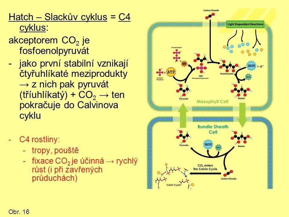 Hatch – Slackův cyklus = C4 cyklus: akceptorem CO 2 je fosfoenolpyruvát -jako první stabilní vznikají čtyřuhlíkaté meziprodukty → z nich pak pyruvát (tříuhlíkatý) + CO 2 → ten pokračuje do Calvinova cyklu -C4 rostliny: -tropy, pouště -fixace CO 2 je účinná → rychlý růst (i při zavřených průduchách) Obr.