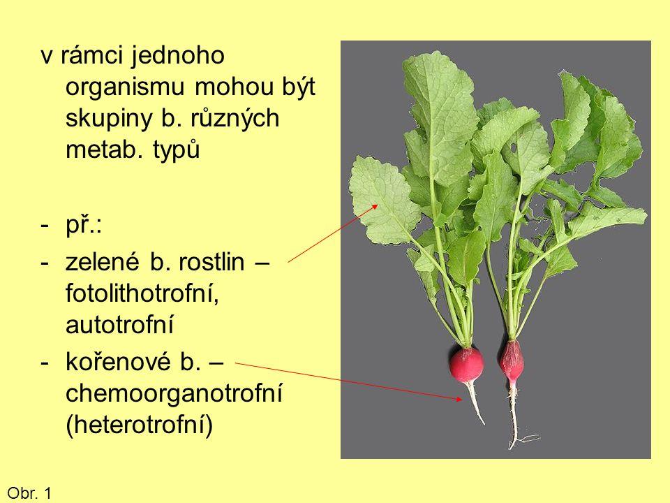 v rámci jednoho organismu mohou být skupiny b. různých metab. typů -př.: -zelené b. rostlin – fotolithotrofní, autotrofní -kořenové b. – chemoorganotr