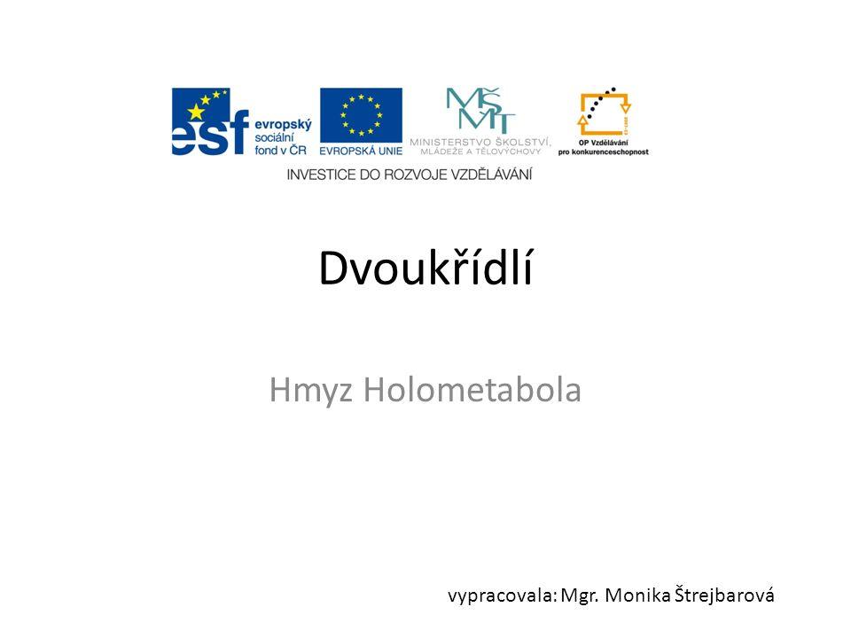 Dvoukřídlí Hmyz Holometabola vypracovala: Mgr. Monika Štrejbarová