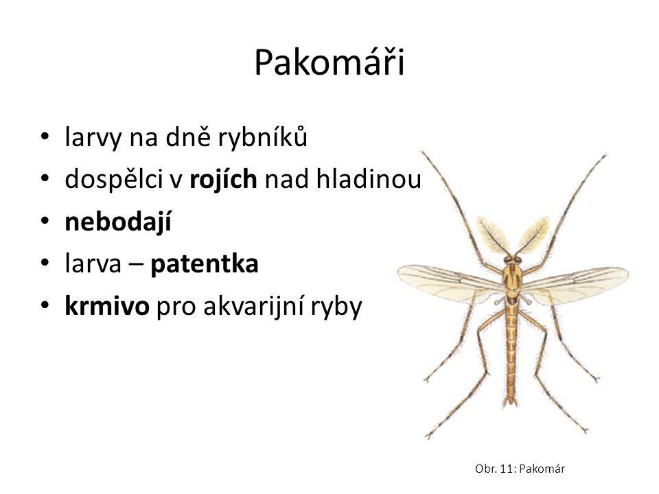 Pakomáři larvy na dně rybníků dospělci v rojích nad hladinou nebodají larva – patentka krmivo pro akvarijní ryby Obr. 11: Pakomár