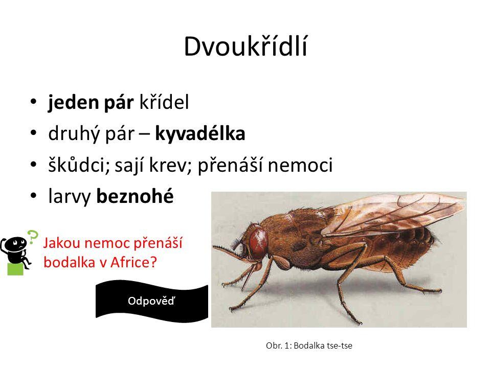 Dvoukřídlí jeden pár křídel druhý pár – kyvadélka škůdci; sají krev; přenáší nemoci larvy beznohé Obr. 1: Bodalka tse-tse Jakou nemoc přenáší bodalka
