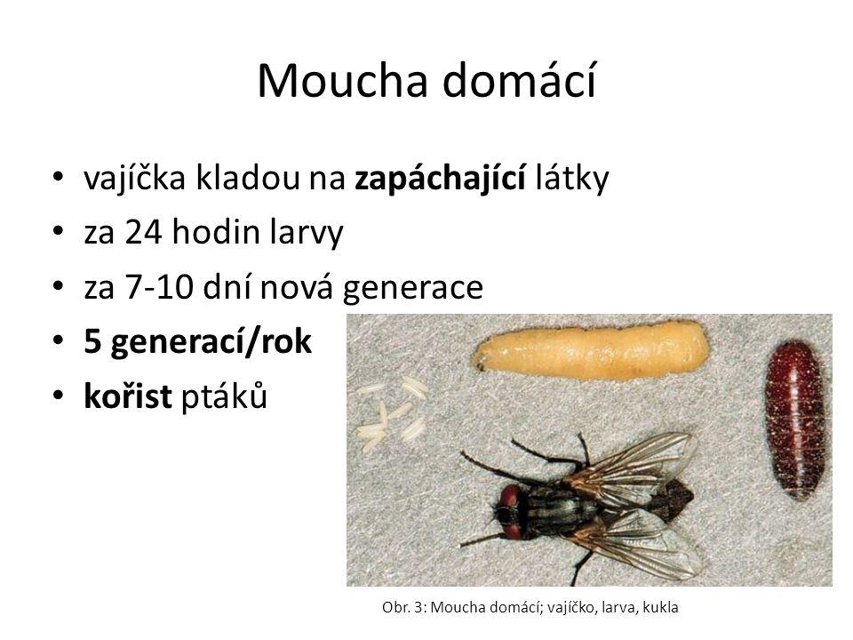 Moucha domácí vajíčka kladou na zapáchající látky za 24 hodin larvy za 7-10 dní nová generace 5 generací/rok kořist ptáků Obr. 3: Moucha domácí; vajíč