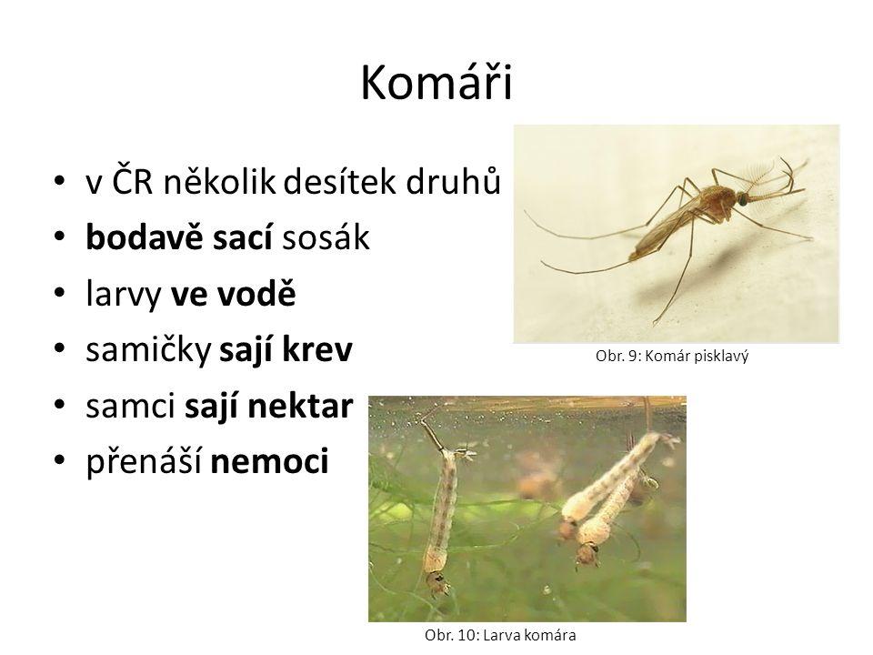Komáři v ČR několik desítek druhů bodavě sací sosák larvy ve vodě samičky sají krev samci sají nektar přenáší nemoci Obr.