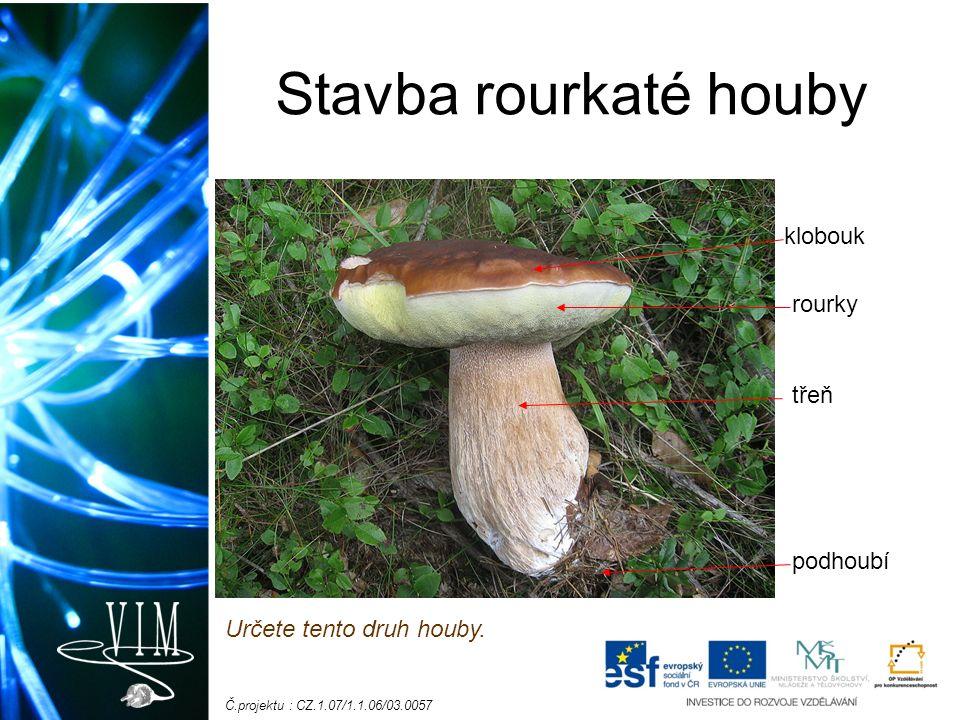 Č.projektu : CZ.1.07/1.1.06/03.0057 Stavba rourkaté houby klobouk rourky třeň podhoubí Určete tento druh houby.