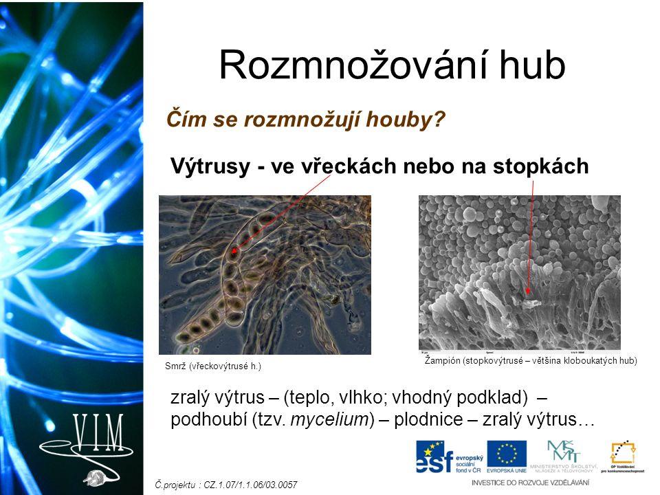 Č.projektu : CZ.1.07/1.1.06/03.0057 Rozmnožování hub Čím se rozmnožují houby? Výtrusy - ve vřeckách nebo na stopkách zralý výtrus – (teplo, vlhko; vho