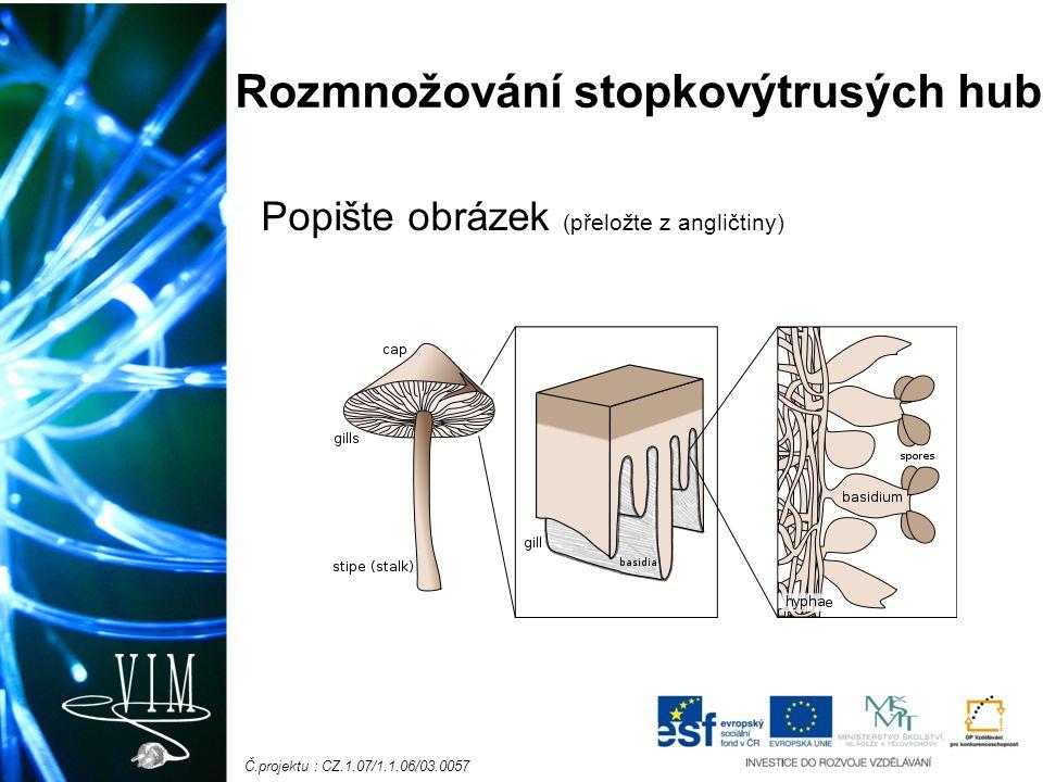 Č.projektu : CZ.1.07/1.1.06/03.0057 Rozmnožování stopkovýtrusých hub Popište obrázek (přeložte z angličtiny)