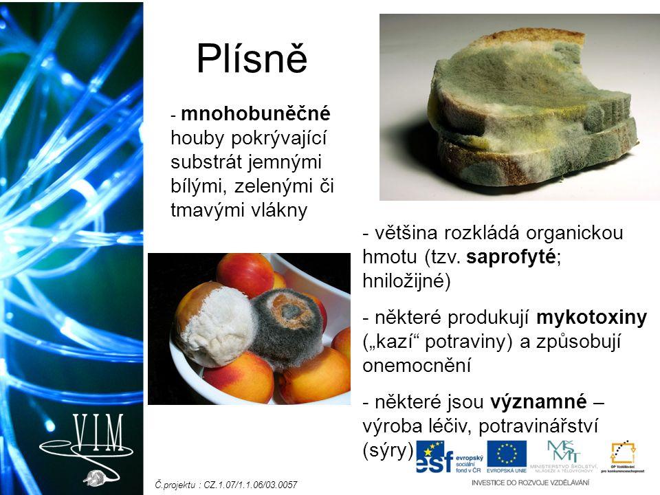 Č.projektu : CZ.1.07/1.1.06/03.0057 Plísně - mnohobuněčné houby pokrývající substrát jemnými bílými, zelenými či tmavými vlákny - většina rozkládá org