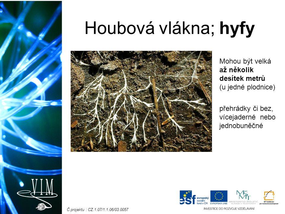Č.projektu : CZ.1.07/1.1.06/03.0057 Co najdeme uvnitř houbového vlákna.