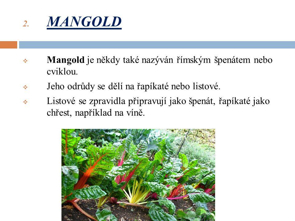 2. MANGOLD  Mangold je někdy také nazýván římským špenátem nebo cviklou.
