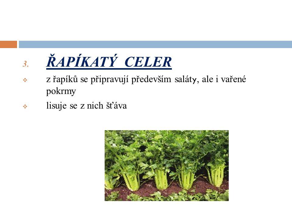 3. ŘAPÍKATÝ CELER  z řapíků se připravují především salát y, ale i vařené pokrmy  lisuje se z nich šťáva