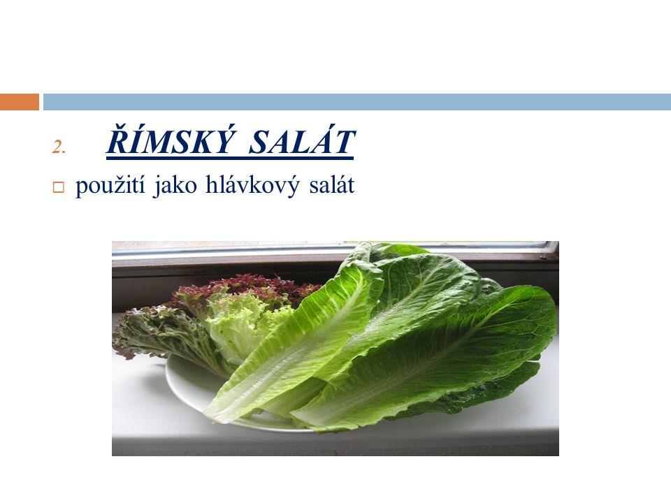 2. ŘÍMSKÝ SALÁT  použití jako hlávkový salát