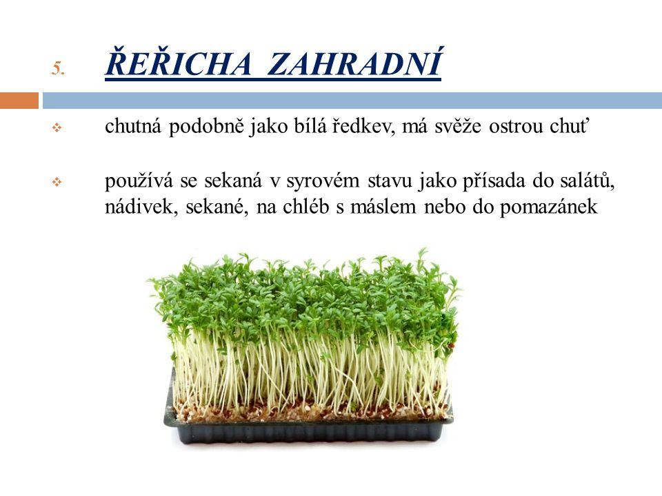 5. ŘEŘICHA ZAHRADNÍ  chutná podobně jako bílá ředkev, má svěže ostrou chuť  používá se sekaná v syrovém stavu jako přísada do salátů, nádivek, sekan