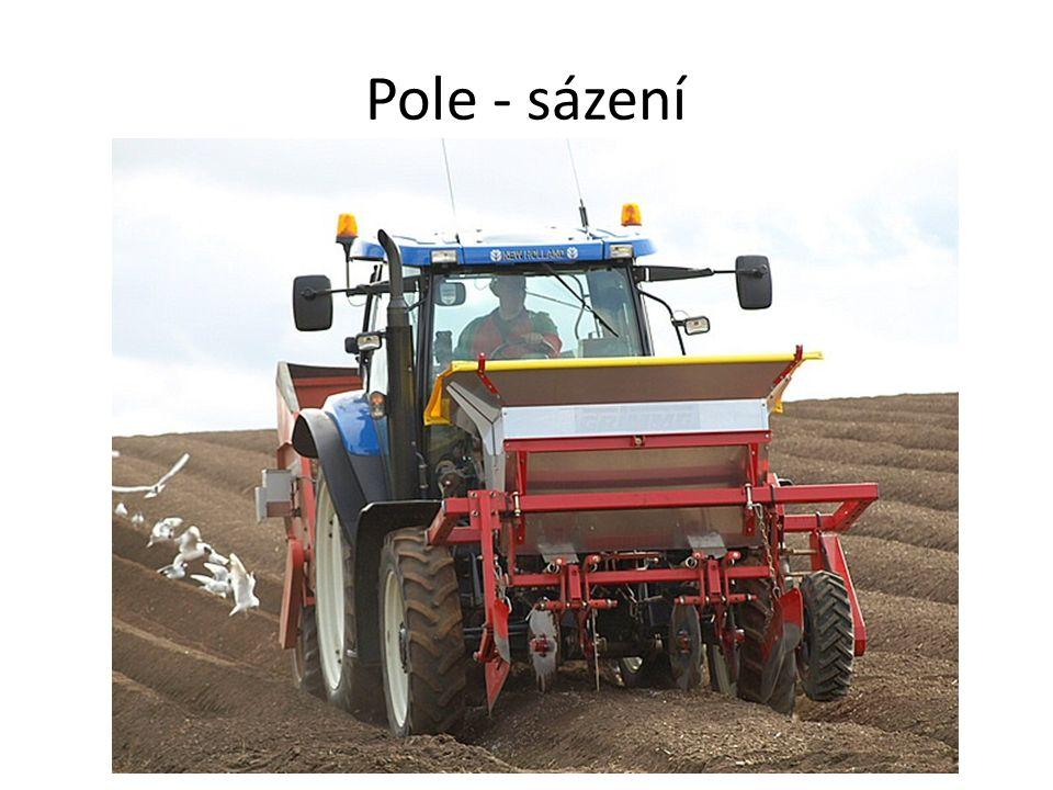 Pole - proorávání Brambory se musí proorat (okopat), aby se zbavily plevelů.