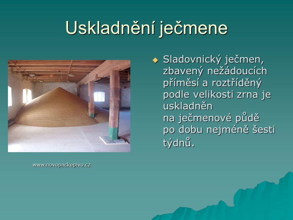 Uskladnění ječmene  Sladovnický ječmen, zbavený nežádoucích příměsí a roztříděný podle velikosti zrna je uskladněn na ječmenové půdě po dobu nejméně šesti týdnů.