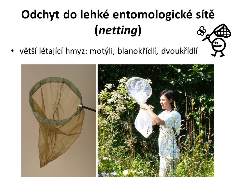 Odchyt do lehké entomologické sítě (netting) větší létající hmyz: motýli, blanokřídlí, dvoukřídlí
