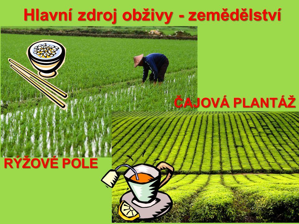 Hlavní zdroj obživy - zemědělství ČAJOVÁ PLANTÁŽ RÝŽOVÉ POLE