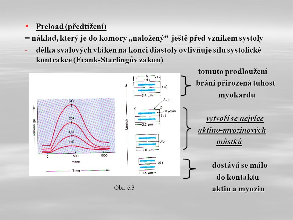 """ Preload (předtížení) = náklad, který je do komory """"naložený ještě před vznikem systoly -délka svalových vláken na konci diastoly ovlivňuje sílu systolické kontrakce (Frank-Starlingův zákon) tomuto prodloužení tomuto prodloužení brání přirozená tuhost brání přirozená tuhost myokardu myokardu vytvoří se nejvíce vytvoří se nejvíce aktino-myozinových aktino-myozinových můstků můstků dostává se málo dostává se málo do kontaktu do kontaktu aktin a myozin aktin a myozin Obr."""