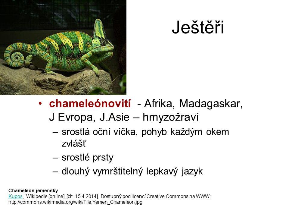 Ještěři chameleónovití - Afrika, Madagaskar, J Evropa, J.Asie – hmyzožraví –srostlá oční víčka, pohyb každým okem zvlášť –srostlé prsty –dlouhý vymršt