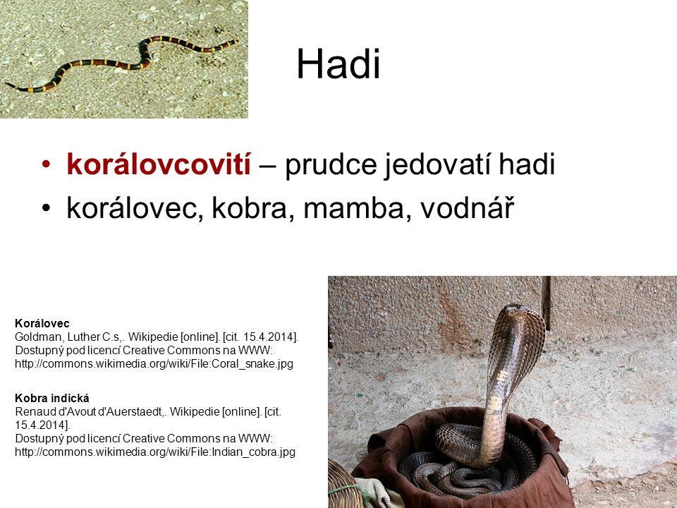 Hadi korálovcovití – prudce jedovatí hadi korálovec, kobra, mamba, vodnář Kobra indická Renaud d'Avout d'Auerstaedt,. Wikipedie [online]. [cit. 15.4.2