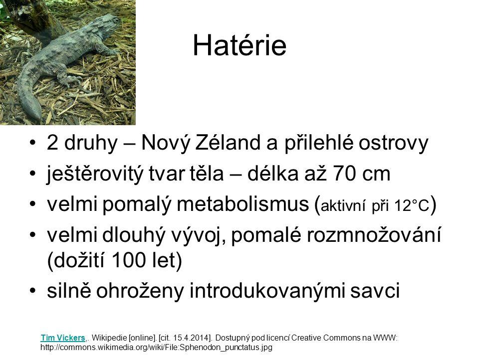 Hatérie 2 druhy – Nový Zéland a přilehlé ostrovy ještěrovitý tvar těla – délka až 70 cm velmi pomalý metabolismus ( aktivní při 12°C ) velmi dlouhý vý