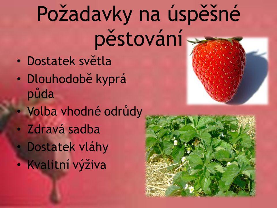 Požadavky na úspěšné pěstování Dostatek světla Dlouhodobě kyprá půda Volba vhodné odrůdy Zdravá sadba Dostatek vláhy Kvalitní výživa