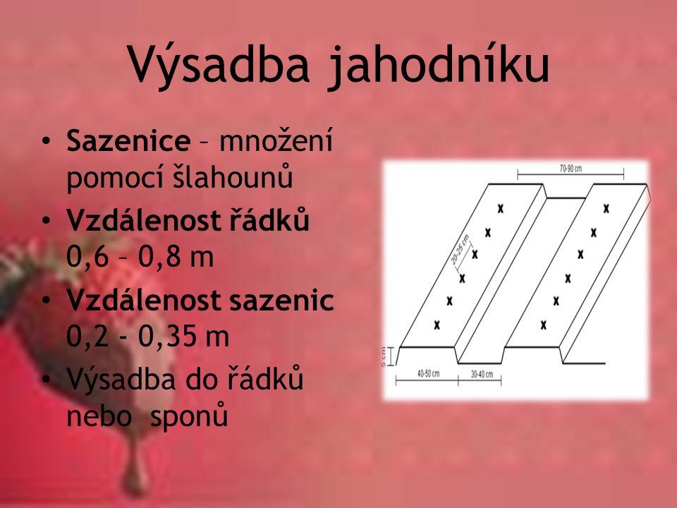 Výsadba jahodníku Sazenice – množení pomocí šlahounů Vzdálenost řádků 0,6 – 0,8 m Vzdálenost sazenic 0,2 - 0,35 m Výsadba do řádků nebo sponů