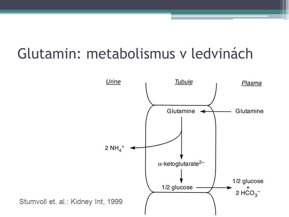 Glutamin: metabolismus ve střevě Glutamin (5 g/den) Glutamin Glutamát Ornitin 2-oxogultarát Citrullin Arginin DNA, mRNA ATP ledviny