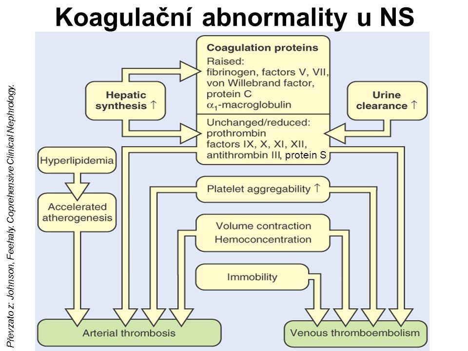Koagulační abnormality u NS Převzato z: Johnson, Feehaly. Coprehensive Clinical Nephrology., protein S