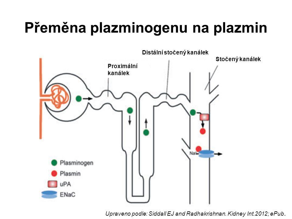 Přeměna plazminogenu na plazmin Proximální kanálek Distální stočený kanálek Stočený kanálek Upraveno podle: Siddall EJ and Radhakrishnan. Kidney Int.2