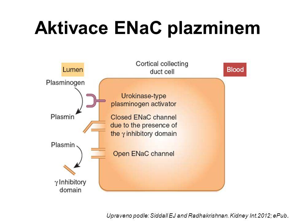 Aktivace ENaC plazminem Upraveno podle: Siddall EJ and Radhakrishnan. Kidney Int.2012; ePub.