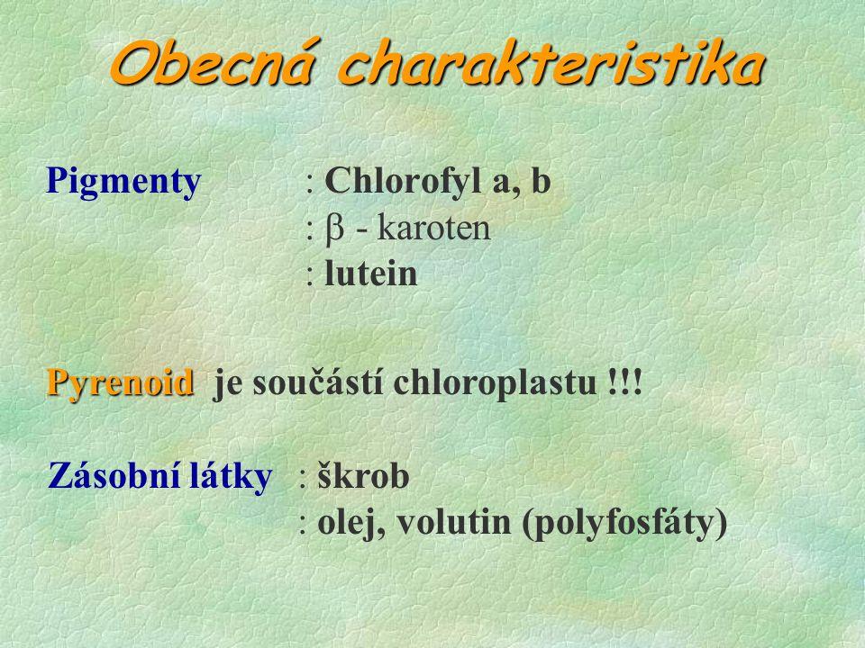 Obecná charakteristika Pigmenty: Chlorofyl a, b :  - karoten : lutein Zásobní látky: škrob : olej, volutin (polyfosfáty) Pyrenoid Pyrenoid je součástí chloroplastu !!!