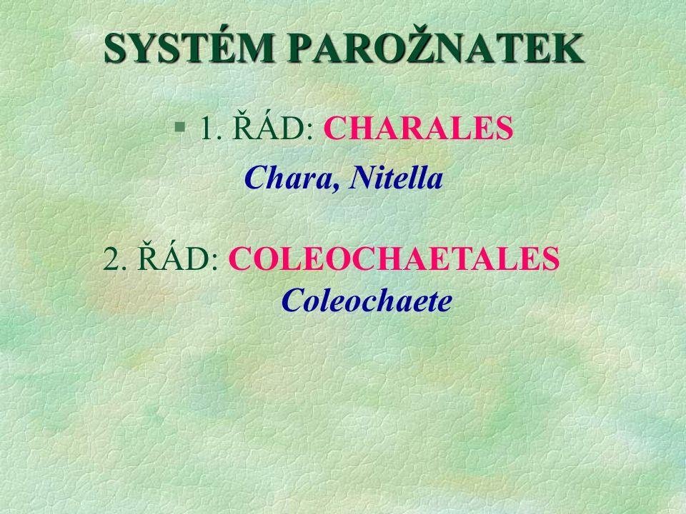 SYSTÉM PAROŽNATEK §1. ŘÁD: CHARALES Chara, Nitella 2. ŘÁD: COLEOCHAETALES Coleochaete