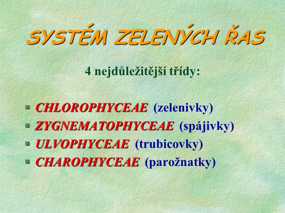 SYSTÉM ZELENÝCH ŘAS 4 nejdůležitější třídy: §CHLOROPHYCEAE §CHLOROPHYCEAE (zelenivky) §ZYGNEMATOPHYCEAE §ZYGNEMATOPHYCEAE (spájivky) §ULVOPHYCEAE §ULVOPHYCEAE (trubicovky) §CHAROPHYCEAE §CHAROPHYCEAE (parožnatky)