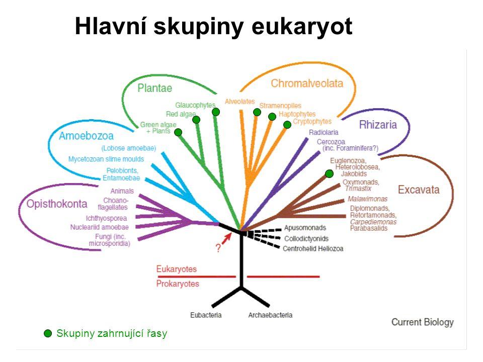 Hlavní skupiny eukaryot Skupiny zahrnující řasy