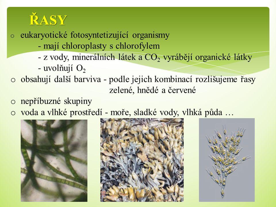 ŘASY o eukaryotické fotosyntetizující organismy - mají chloroplasty s chlorofylem - z vody, minerálních látek a CO 2 vyrábějí organické látky - uvolňu