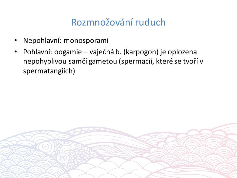 Rozmnožování ruduch Nepohlavní: monosporami Pohlavní: oogamie – vaječná b.