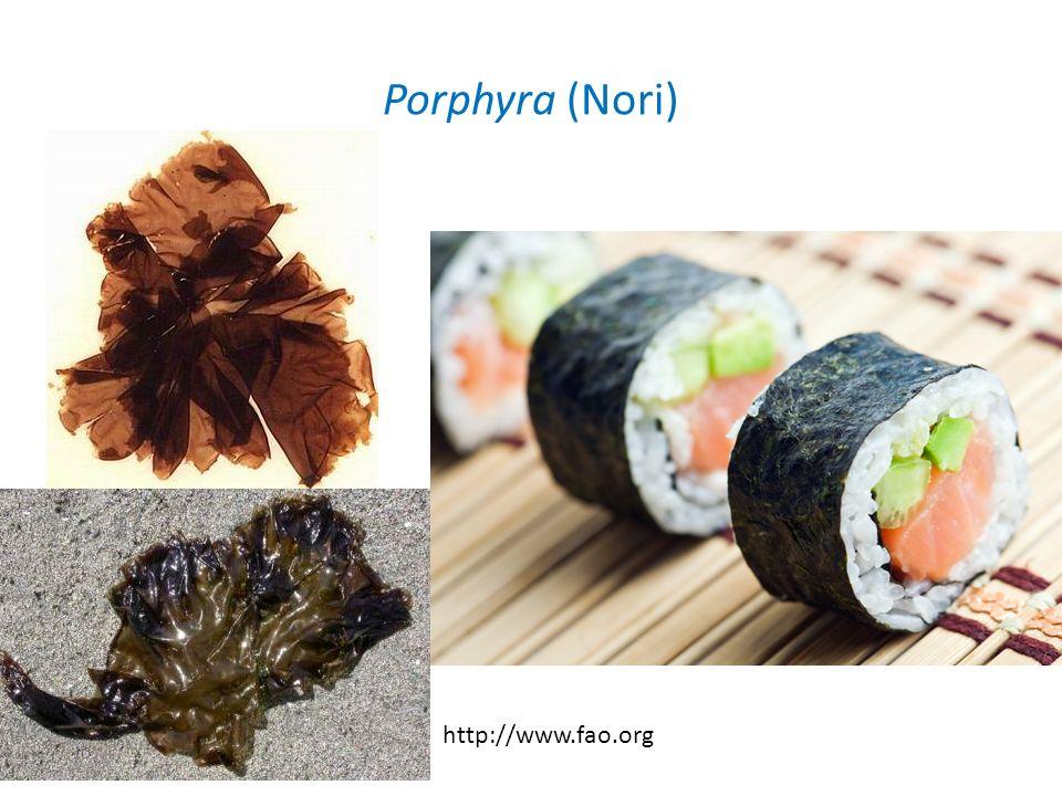 Porphyra (Nori) http://www.fao.org