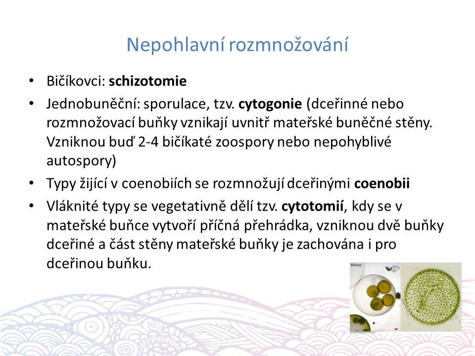 Nepohlavní rozmnožování Bičíkovci: schizotomie Jednobuněční: sporulace, tzv.