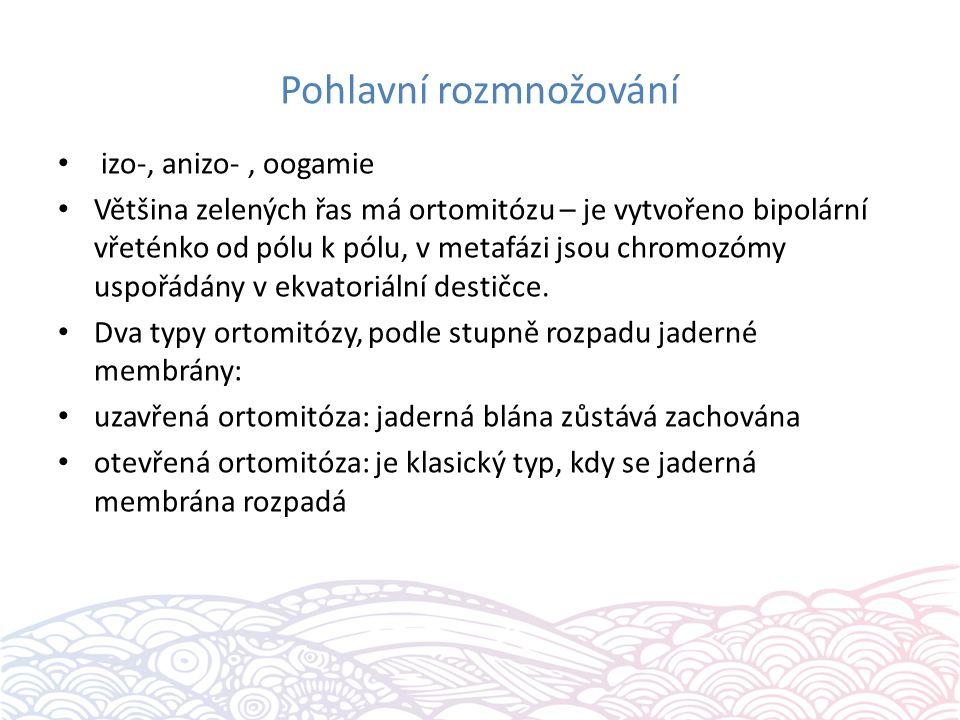 Pohlavní rozmnožování izo-, anizo-, oogamie Většina zelených řas má ortomitózu – je vytvořeno bipolární vřeténko od pólu k pólu, v metafázi jsou chromozómy uspořádány v ekvatoriální destičce.