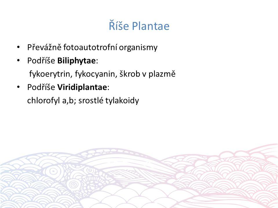 Říše Plantae Převážně fotoautotrofní organismy Podříše Biliphytae: fykoerytrin, fykocyanin, škrob v plazmě Podříše Viridiplantae: chlorofyl a,b; srostlé tylakoidy