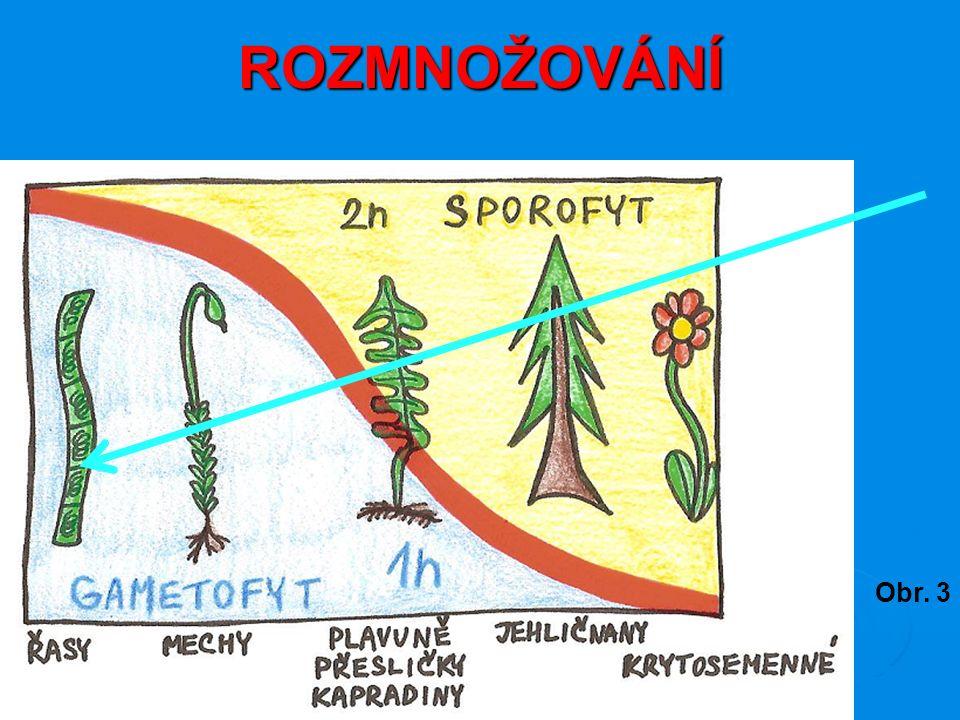 ROZMNOŽOVÁNÍ Obr. 3