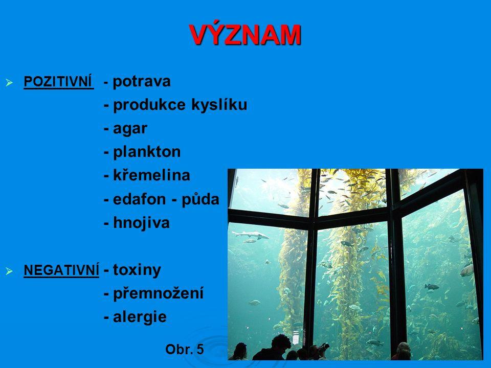 VÝZNAM  POZITIVNÍ - potrava - produkce kyslíku - agar - plankton - křemelina - edafon - půda - hnojiva  NEGATIVNÍ - toxiny - přemnožení - alergie Ob
